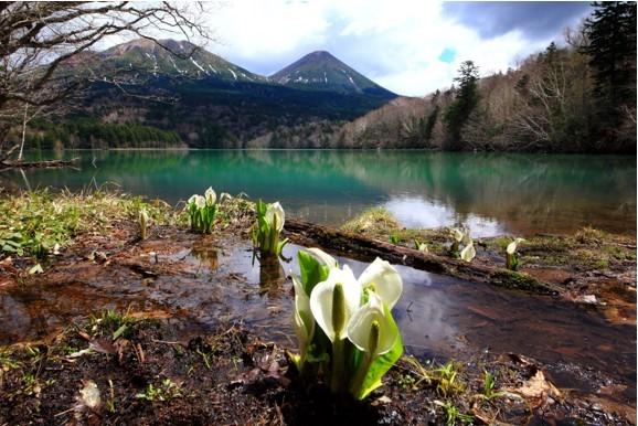 湖畔に咲く水芭蕉がオンネトーに春の訪れを告げる