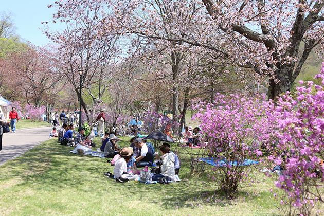 つつじ、サクラ開花期の本別公園(つつじ祭り開催時)
