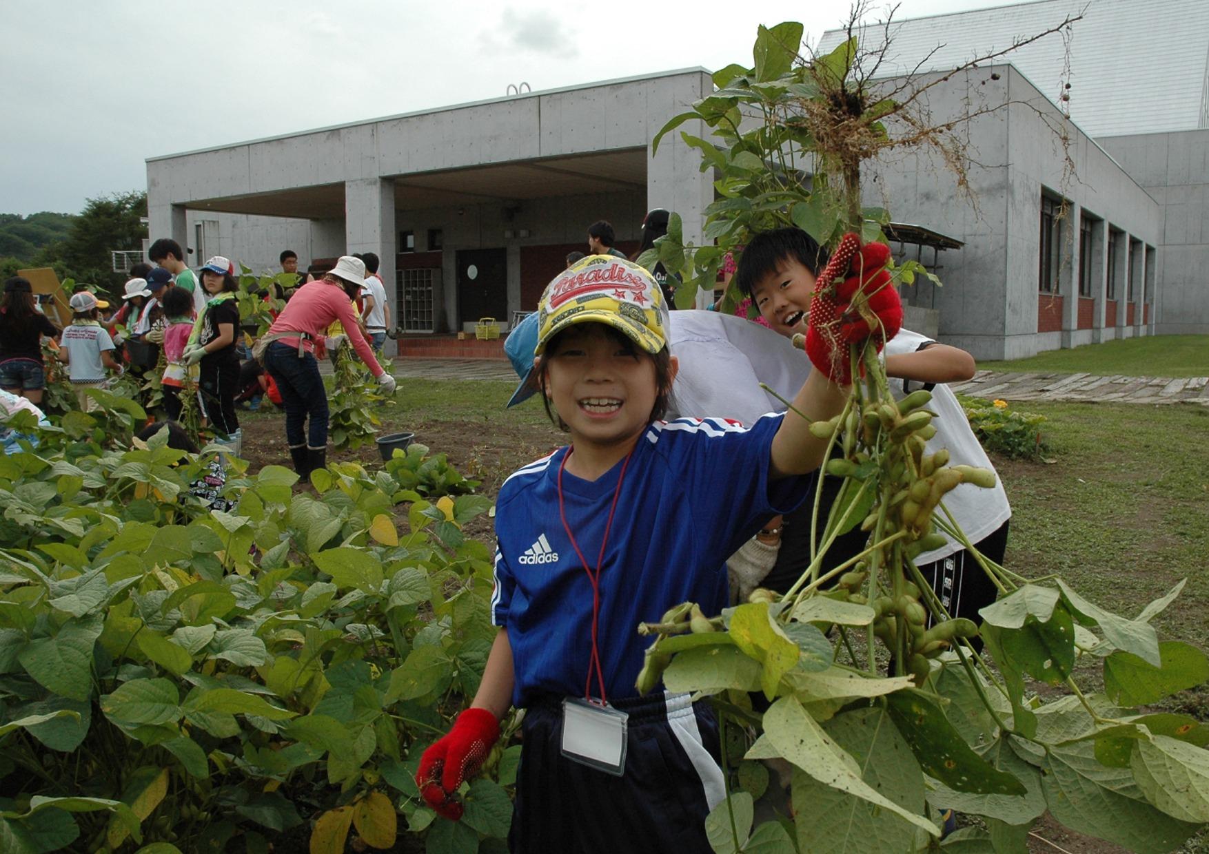 秋には農園で育った野菜を収穫する体験もできます。
