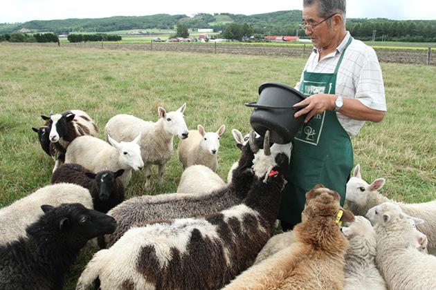 ひとなつっこい羊もいれば、人見知りの羊も・・・。かわいい羊たちに会いに来て下さいね