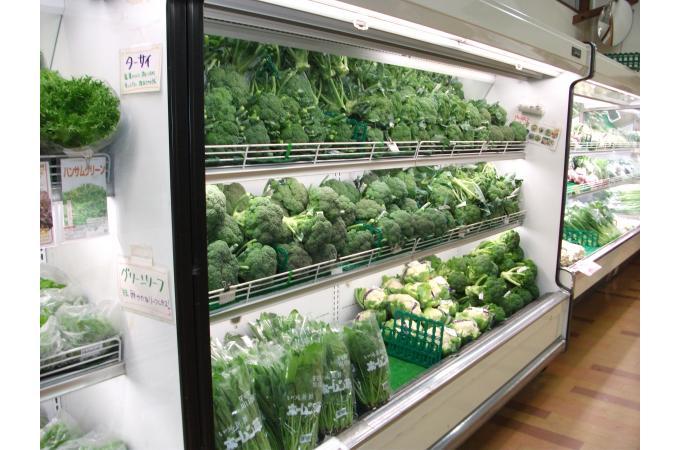 採りたて新鮮野菜